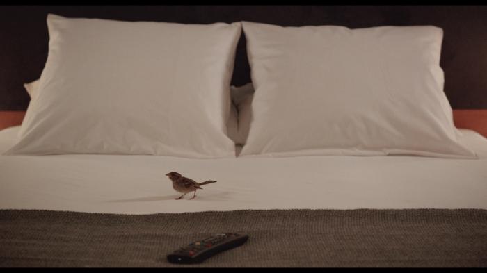 bird-people